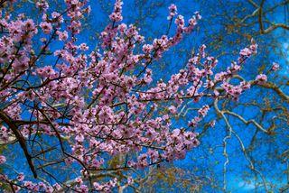 Descanso Gardens2-0026