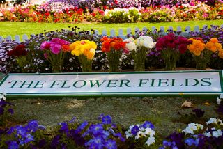 Carlsbad Flower Fields-0071