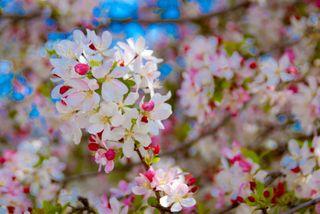 Descanso Gardens2-0041